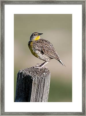 Framed Print featuring the photograph Western Meadowlark by Gary Lengyel