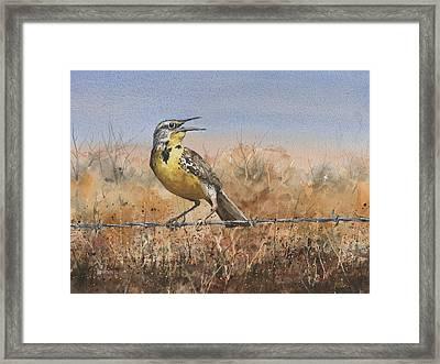 Western Meadowlark Framed Print by Sam Sidders