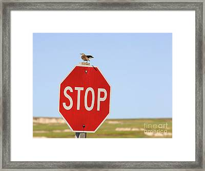 Western Meadowlark Singing On Top Of A Stop Sign Framed Print by Louise Heusinkveld