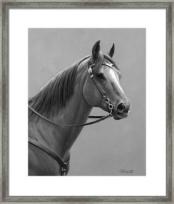 Western Quarter Horse Black And White Framed Print by Crista Forest