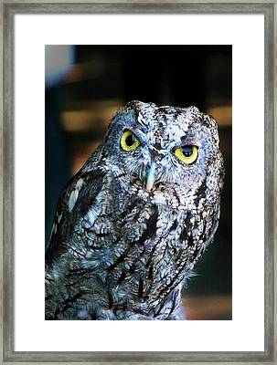 Framed Print featuring the photograph Western Screech Owl by Anthony Jones