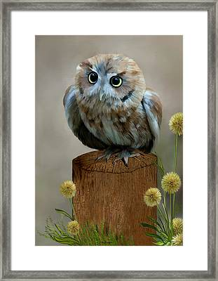 Western Screech Owl Framed Print by Thanh Thuy Nguyen