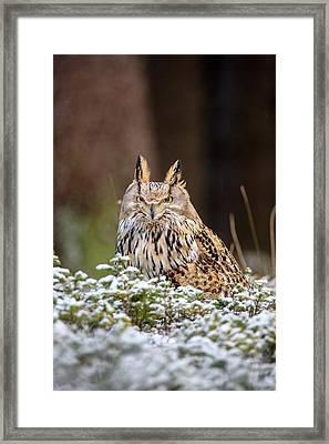 Western Siberian Owl Framed Print