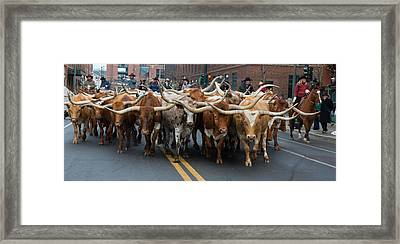 Western Stock Show Framed Print