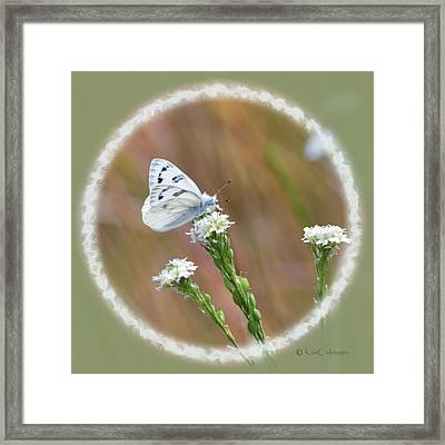 Western White Butterfly Framed Print