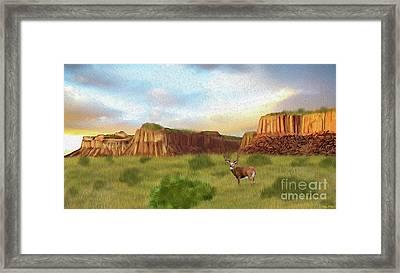 Western Whitetail Deer Framed Print