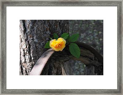 Western Yellow Rose II Framed Print by Jody Lovejoy