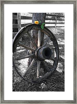 Western Yellow Rose IIi Framed Print