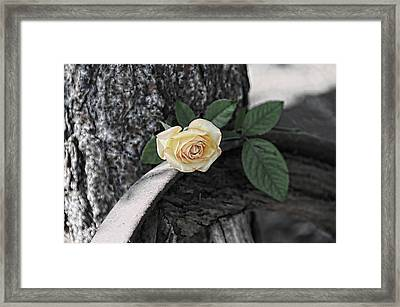 Western Yellow Rose Iv Framed Print