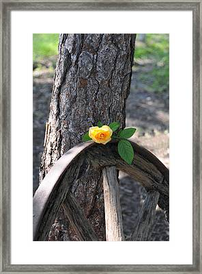 Western Yellow Rose Framed Print
