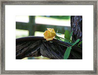 Western Yellow Rose Vii Framed Print