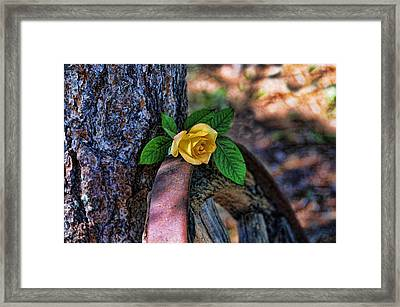 Western Yellow Rose Viii Framed Print