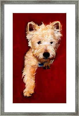 Westie Boy Framed Print