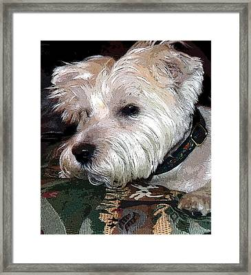 Westie Framed Print by Mindy Newman