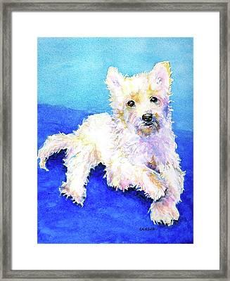 Westie Painting In Watercolor  Framed Print