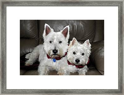 Westie World Framed Print by Geraldine Alexander
