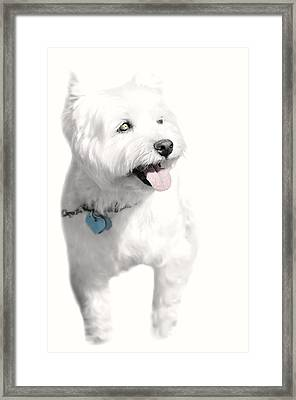 Westy Framed Print by Diana Angstadt