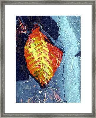 Wet Autumn Framed Print