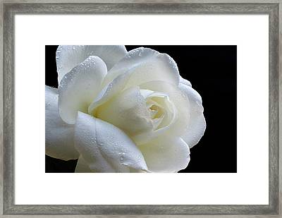 Wet Beauty. Framed Print by Terence Davis