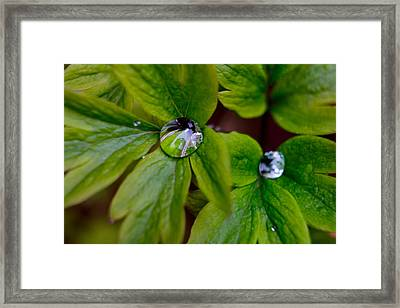 Framed Print featuring the photograph Wet Bleeding Heart Leaves by Brent L Ander