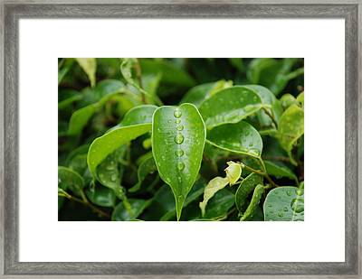 Framed Print featuring the photograph Wet Bushes by Rob Hans