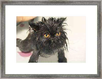 Wet Cat Framed Print by M. Watson