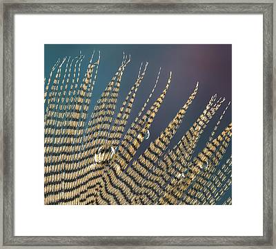 Wet Drop On Wood Duck Feather Framed Print