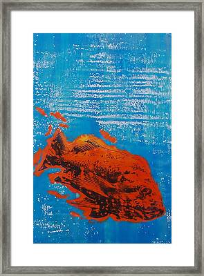 Wet Fish Framed Print by Kim Quinn Nicholson