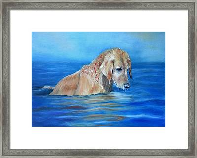 Wet Godden Retriever Framed Print