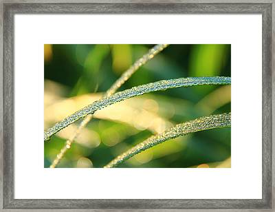 Wet Grass Framed Print