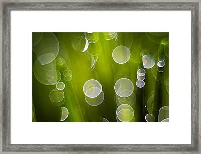 Wet Grass  Framed Print