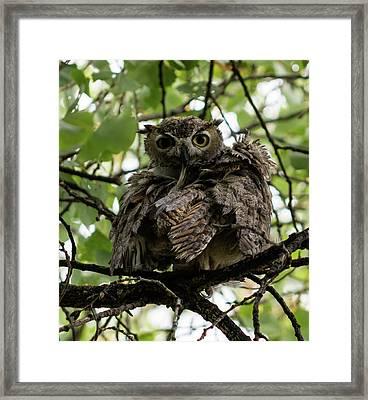 Wet Owl Framed Print