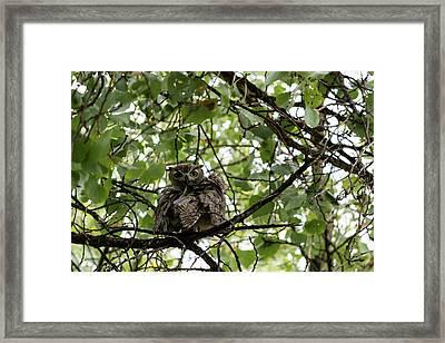 Wet Owl - Wide View Framed Print