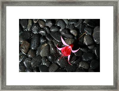 Wet Rocks With Fuscia Flower Framed Print by Michael Ledray