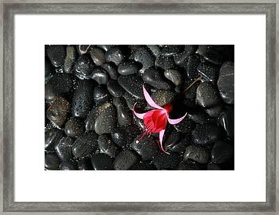 Wet Rocks With Fuscia Flower Framed Print