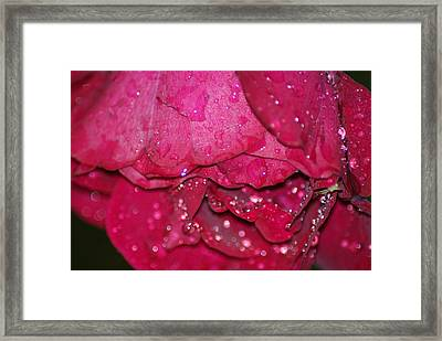 Wet Rose Framed Print by Heather Green