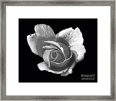 Wet Rose Portrait Framed Print