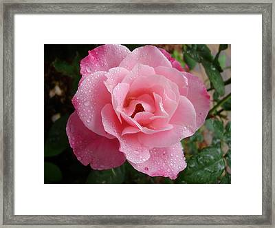 Wet Simplicity Framed Print by Emerald GreenForest