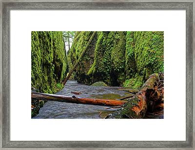 Framed Print featuring the photograph Wet Trail by Jonathan Davison
