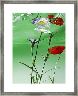 Wet Wild Flower Framed Print by Han Van Vonno