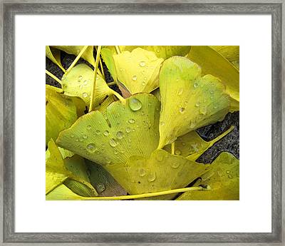Wet Yellow Leaves 2 Wc  Framed Print by Lyle Crump