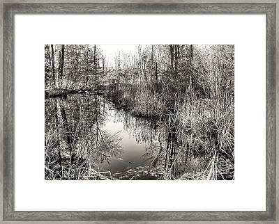 Wetland Essence Framed Print
