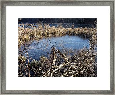 Wetland Pond Framed Print