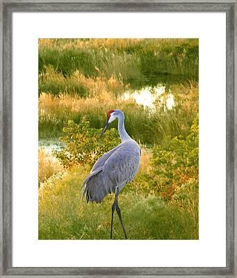Wetland Splendor Framed Print by Adele Moscaritolo