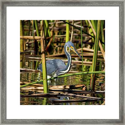 Wetlands Are My Home Framed Print by Dawn Currie