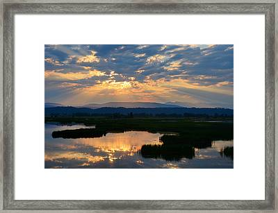 Wetlands Dawn Framed Print by Annie Pflueger