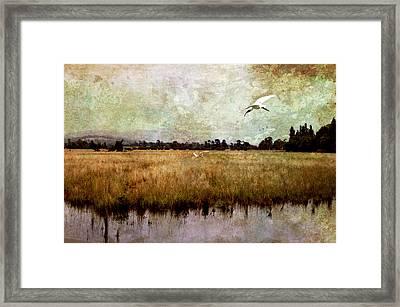 Wetlands Framed Print by Margaret Hormann Bfa