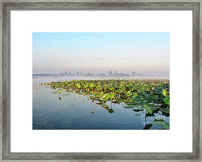 Wetlands Morning Mist  Framed Print by Genevieve Vallee