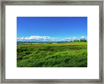 Wetlands On A Windy Spring Day Framed Print