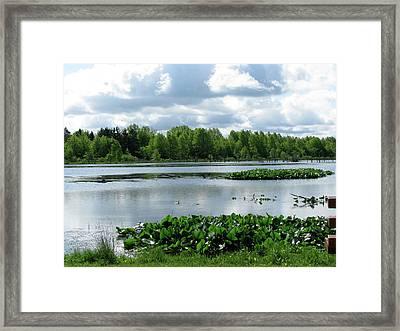 Wetlands Framed Print by Trisha Dahm